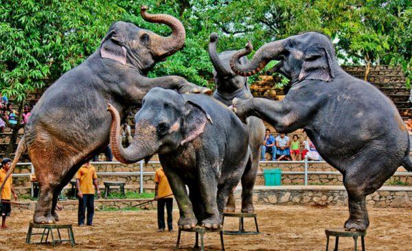 family-tour-eco-treat-sri-lanka