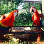 hambantota-bird-park-ecotreat