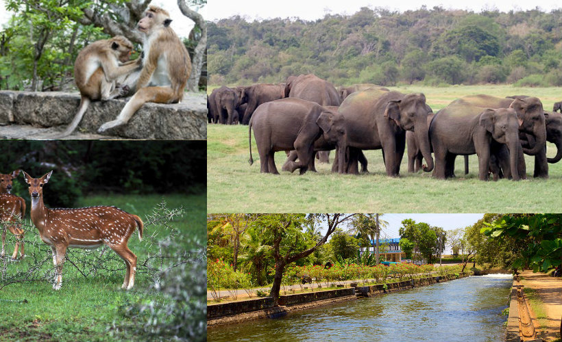 polonnaruwa-city-tour-srilanka-eco-treat