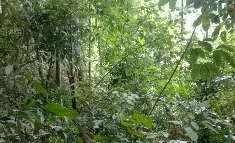 rangamuwa-srilanka-ecotreat