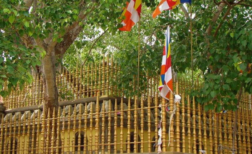 sirimaha-bodiya-tour-srilanka-eco-treat