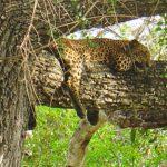 wildlife-srilanka-ecotreat