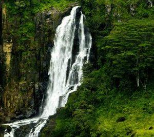 eco-treat-srilanka-newsletter