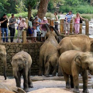 pinnawela-elephant-kindom-srilanka-ecotreat