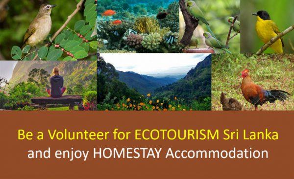 Homestay Sri Lanka as a Volunteer