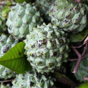 anoda-tour-srilanka-eco-treat – Copy