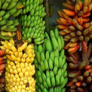banana-tour-srilanka-eco-treat – Copy