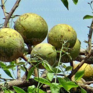 belli-tour-srilanka-eco-treat – Copy