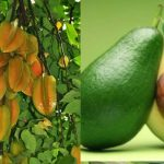 fruits1-tour-srilanka-eco-treat – Copy