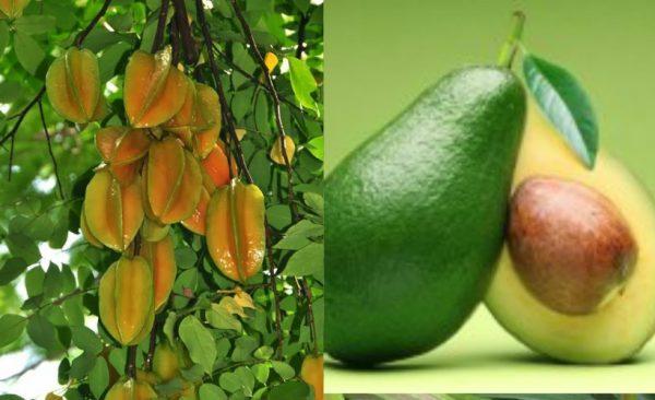fruits1-tour-srilanka-eco-treat – Copy