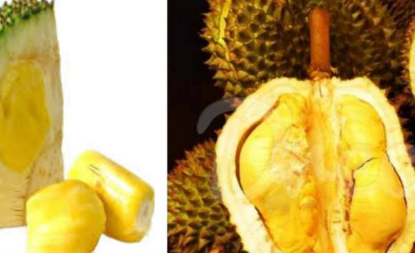 great-fruits-tour-srilanka-eco-treat – Copy