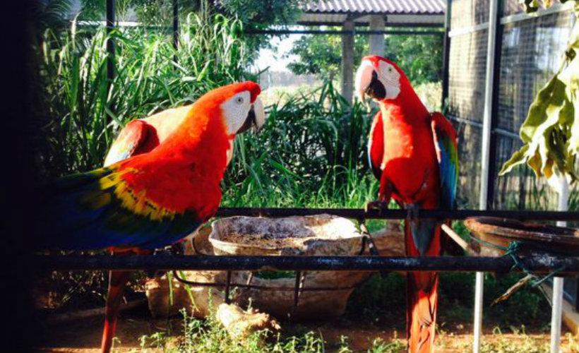 hambantota-bird-park-ecotreat