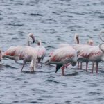 jaffna birds-tour-srilanka-eco-treat