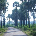 jaffna-nature-srilanka-ecotreat