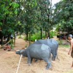 musium-sri-lanka-eco-treat
