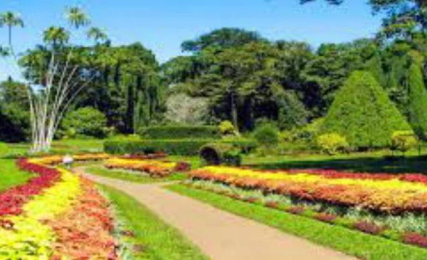peradeniya-garden-srilanka-ecotreat