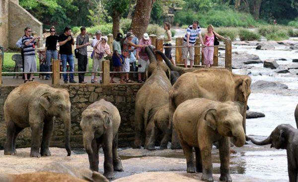 pinnawela-elephant-kindom-srilanka-ecotreat
